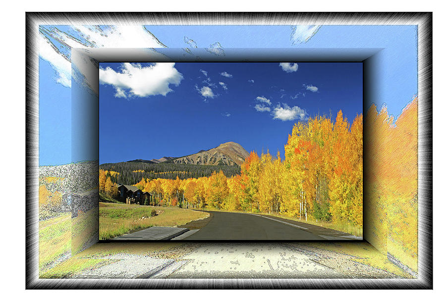 Colorado Aspen Trees by Richard Risely