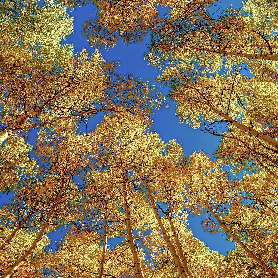Colorado Autumn Sky by OLena Art - Lena Owens