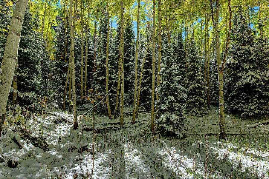 Colorado Autumn  Snow Storm   by OLena Art - Lena Owens