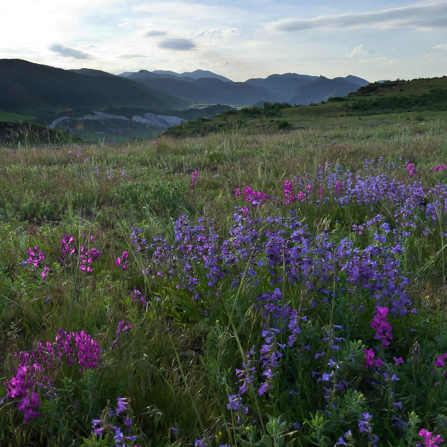 Colorado Foothills Evening Wildflowers and Mountains by Cascade Colors