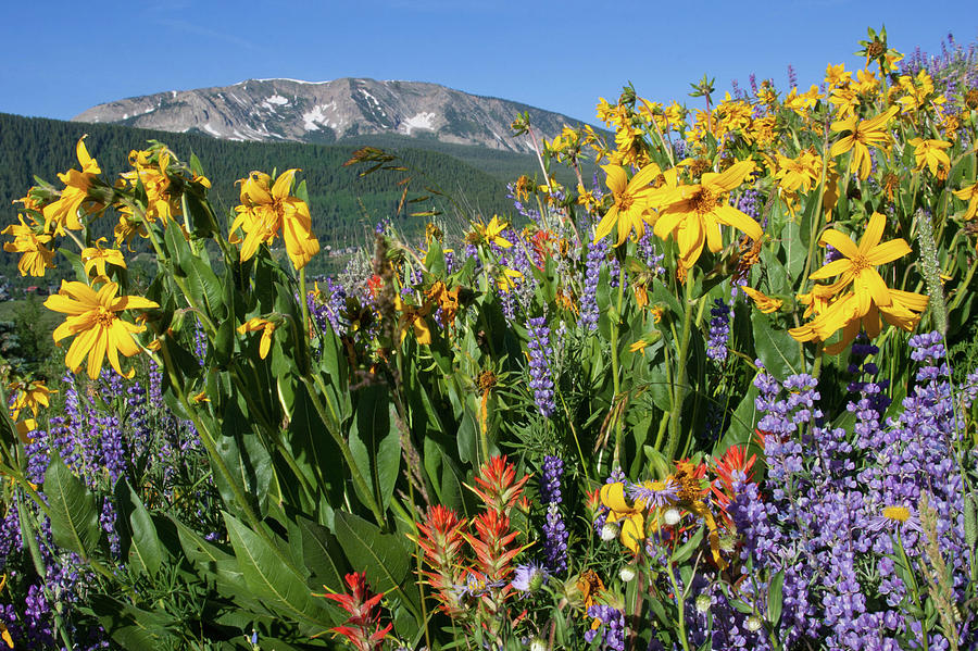 Colorado Rainbow of Wildflowers Landscape by Cascade Colors