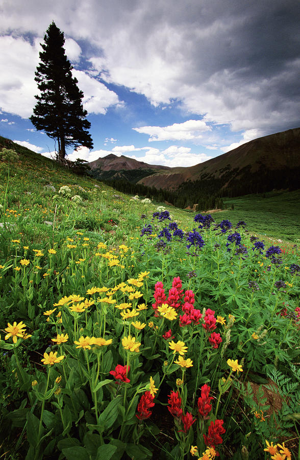 Colorado State Forest Wildflowers, Usa Photograph by Art Wolfe