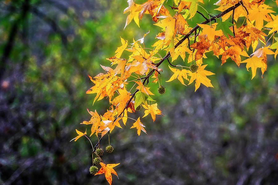 Colored foliage by Roberto Pagani