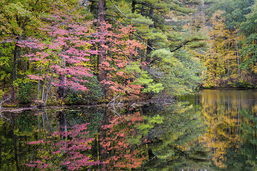 Colorful Autumn by Fran Gallogly