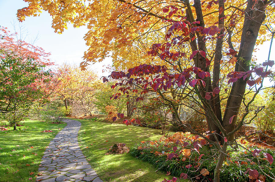 Colorful Autumn In Japanese Garden by Jenny Rainbow