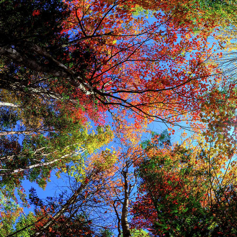 Colorful Autumn in New Hampshire by OLena Art - Lena Owens