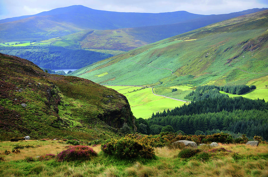 Colorful Autumn in Wicklow.  Green Hills by Jenny Rainbow