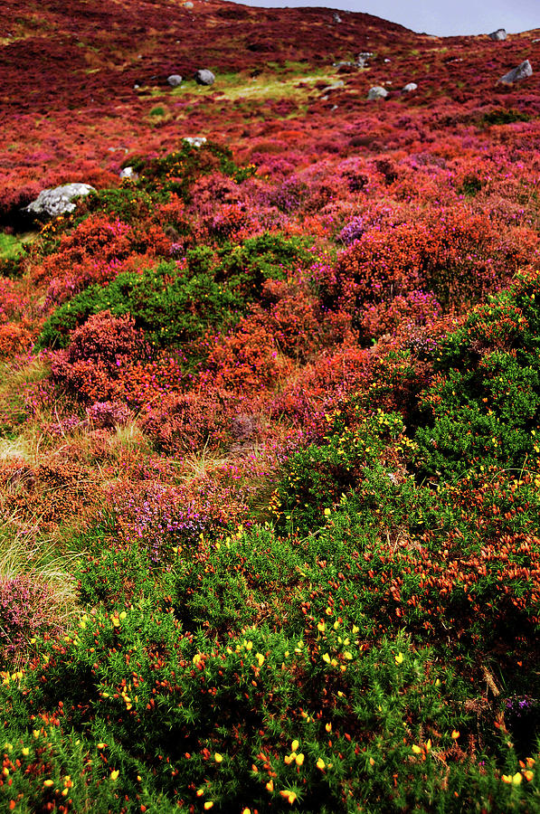 Colorful Autumn in Wicklow.  Red Hills by Jenny Rainbow