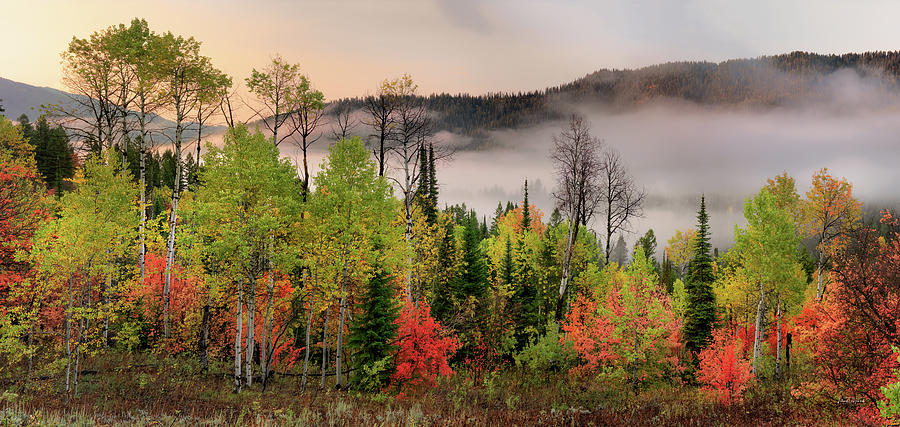 Aspen Forest Photograph - Colorful Autumn Morning by Leland D Howard