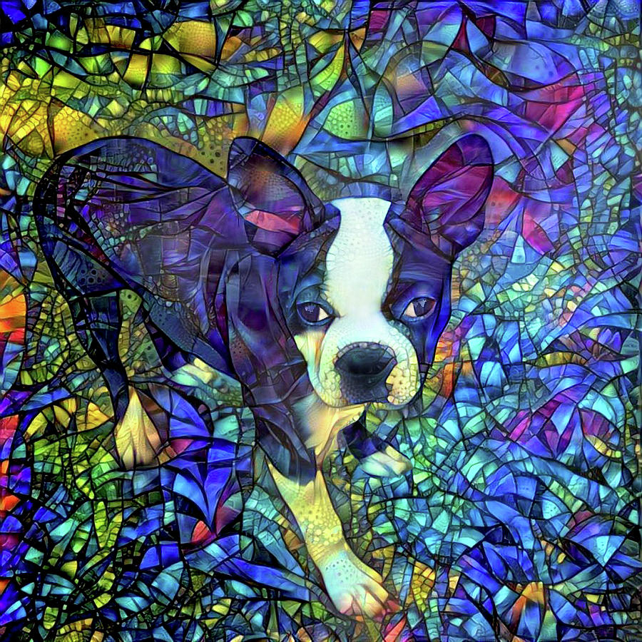 Colorful Boston Terrier Dog Art by Peggy Collins