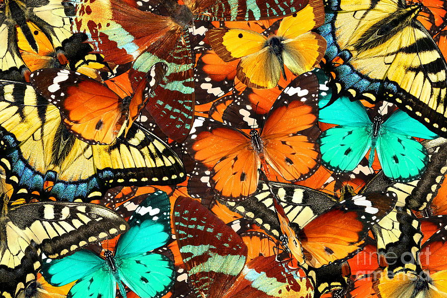 Symbol Photograph - Colorful Butterflies Background. Nature by Protasov An