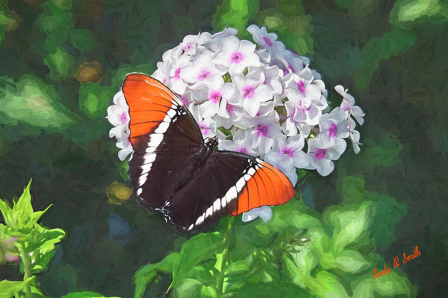 Colorful butterfly on pink and white flowers. by Rusty R Smith