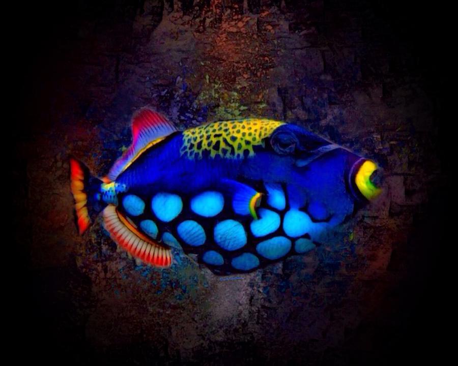 Clown Triggerfish Digital Art - Colorful Clown Triggerfish Portrait by Scott Wallace Digital Designs