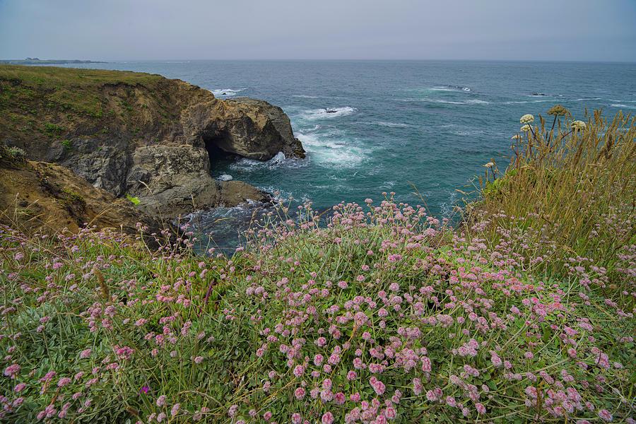 Colorful Coastal Plants by Jonathan Hansen