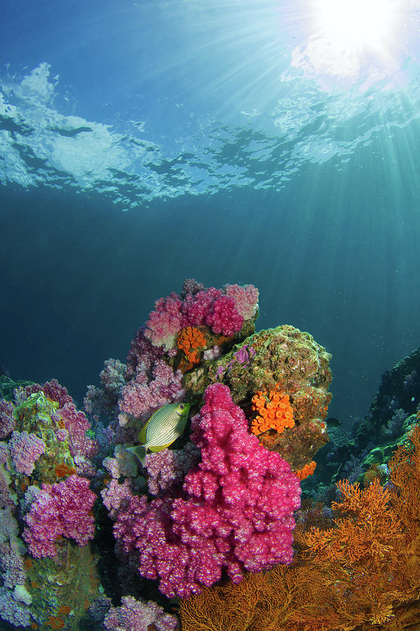 Colorful Coral by Carlene Smith