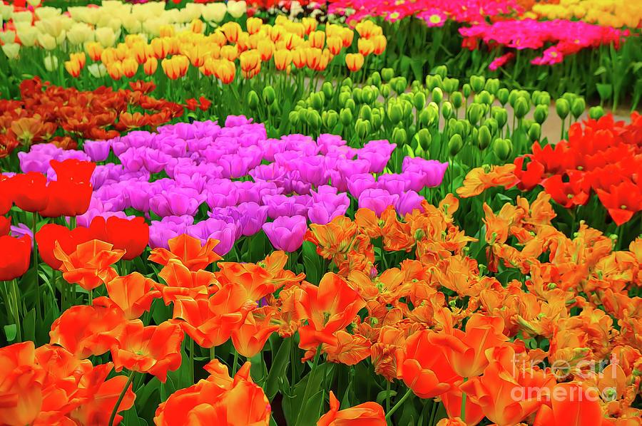 Colorful Dutch Tulip Garden by Sue Melvin