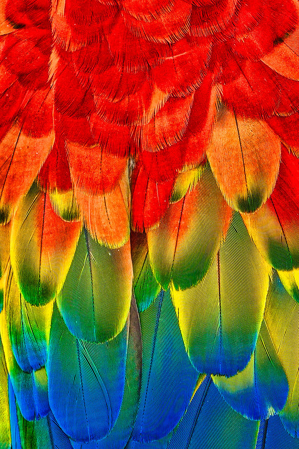 Colorful feathers by Nora Martinez