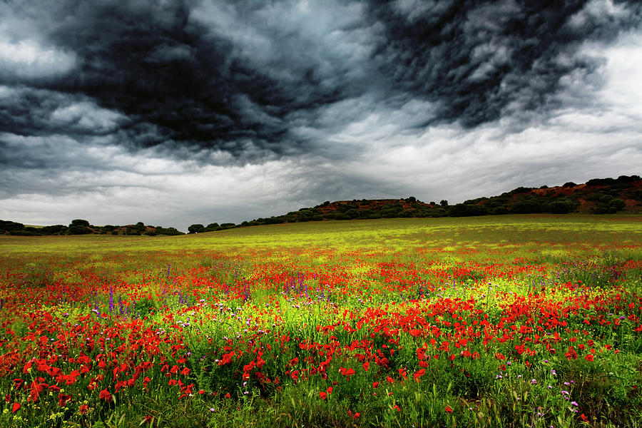 Nature Photograph - Colorful Fields 1 by Vicente Sargues