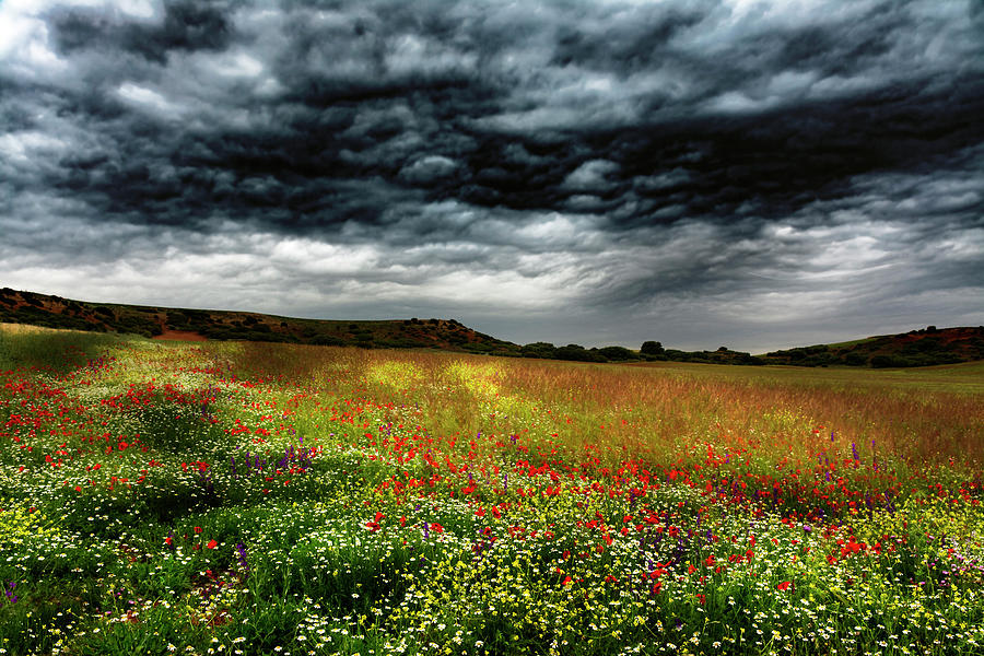 Nature Photograph - Colorful Fields 2 by Vicente Sargues