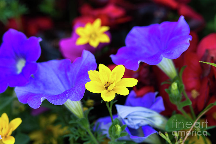Colorful Flowers by Les Palenik