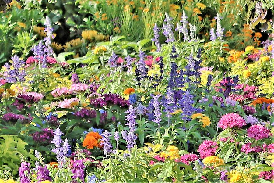 Colorful Garden Photograph