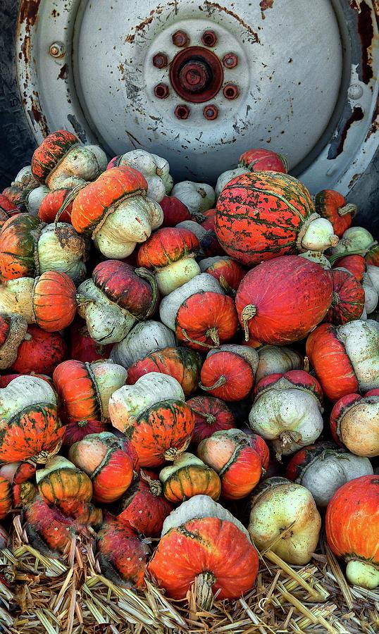 Colorful Gourds by Floyd Hopper
