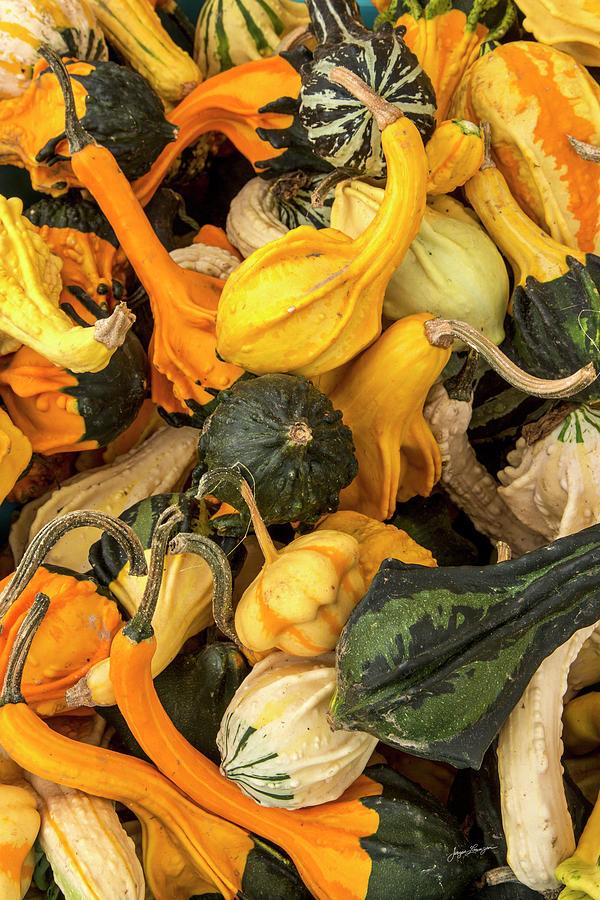 Colorful Gourds by Jurgen Lorenzen