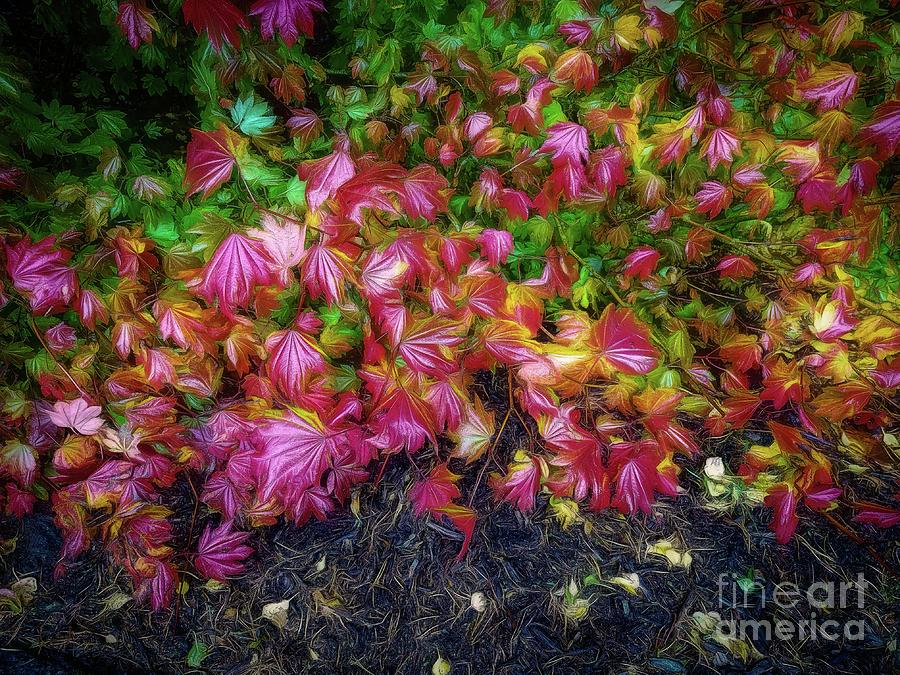 Colorful Leaves by Jon Burch Photography