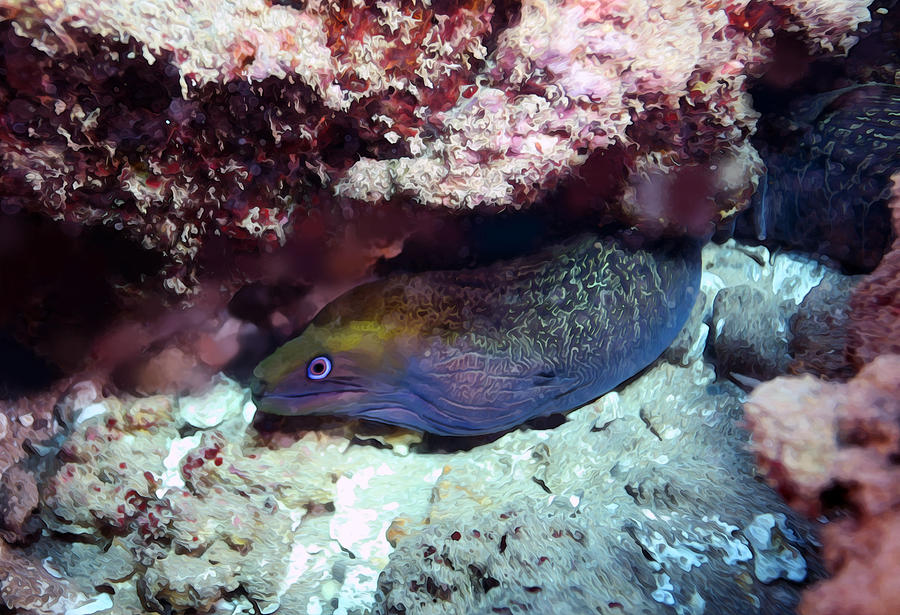 Colorful Moray by Anthony Jones