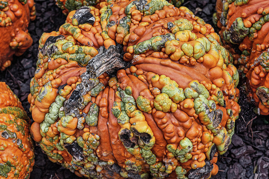 Pumpkin Photograph - Colorful Pumpkin by Randy Bayne