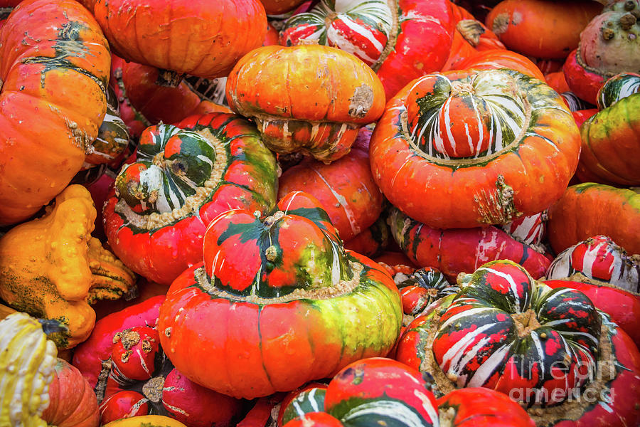 Colorful pumpkins by Lyl Dil Creations
