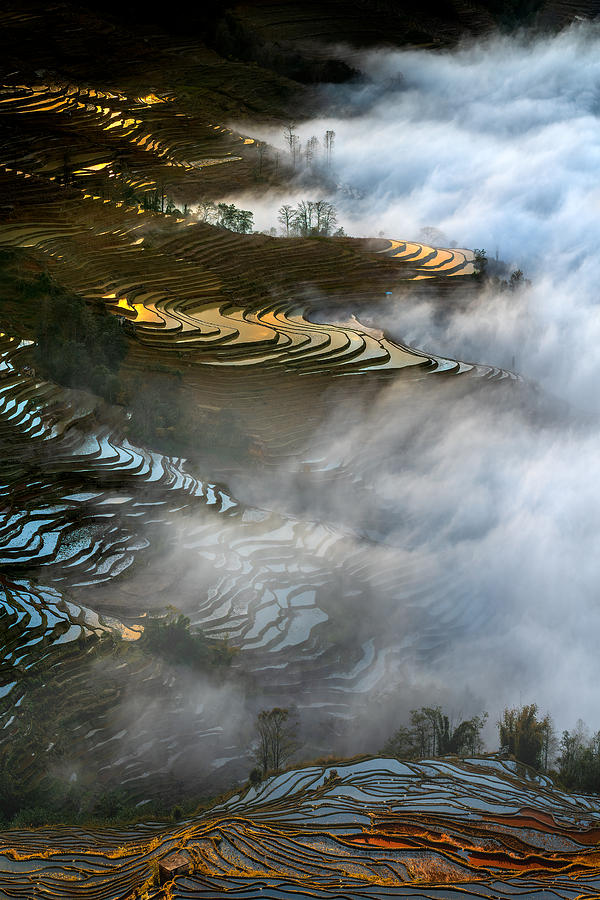 Rice Photograph - Colorful Rice Terraces by Hua Zhu