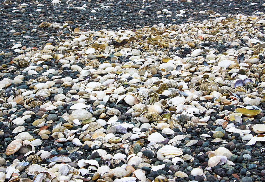 Colorful Sea Shells on a Gravel Beach by Pacific Northwest Sailing