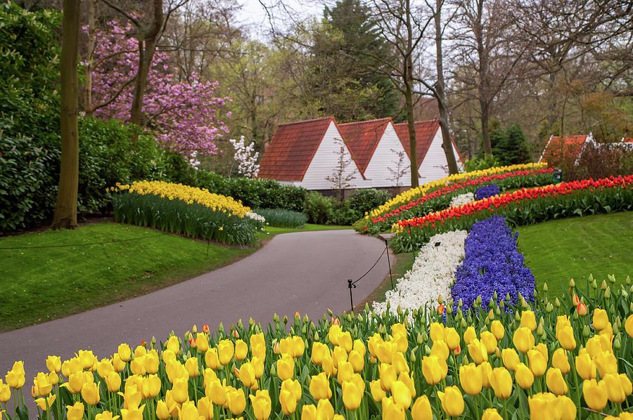 Colorful Stripes of Keukenhof Garden by Jenny Rainbow