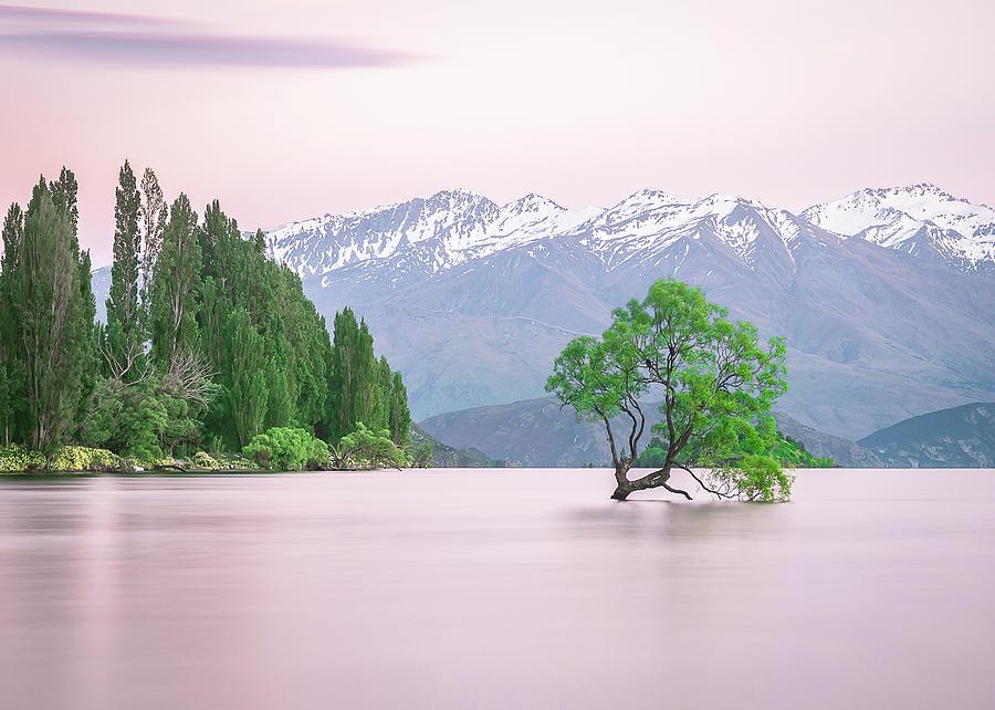New Zealands Wanaka Tree During Colorful Sunrise by Peter Kolejak