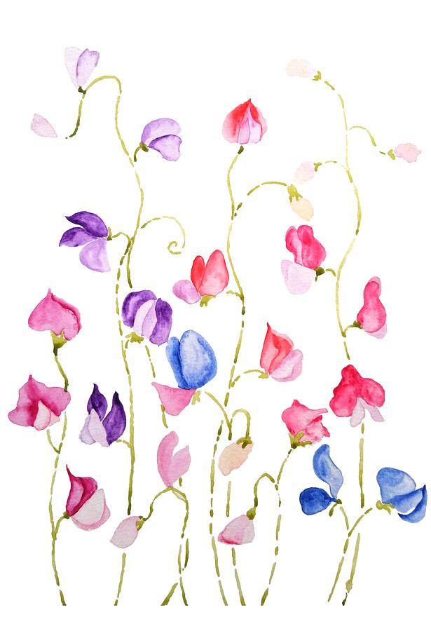 colorful sweet peas watercolor by Color Color