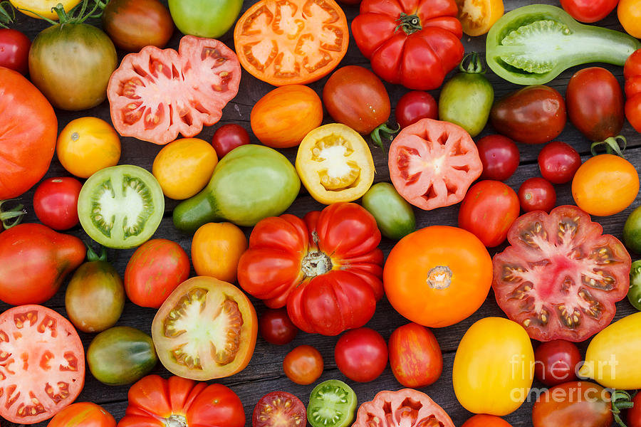 Cherry Photograph - Colorful Tomatoes by Shebeko
