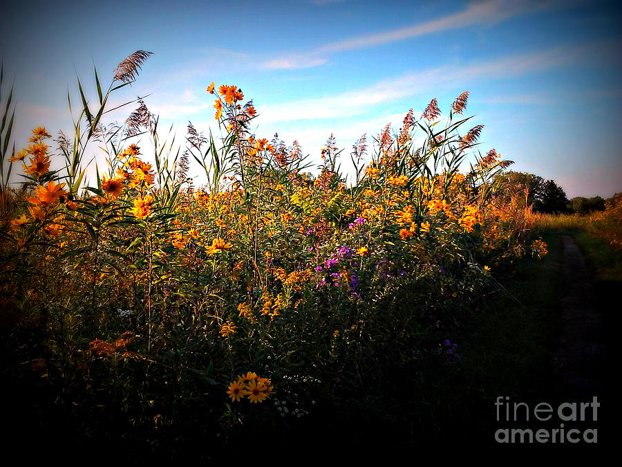 Colorful Wild Flowers Under the Blue Sky by Frank J Casella