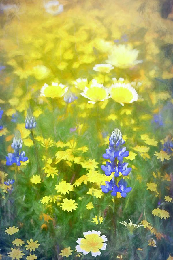 Colors 162 by Pamela Cooper