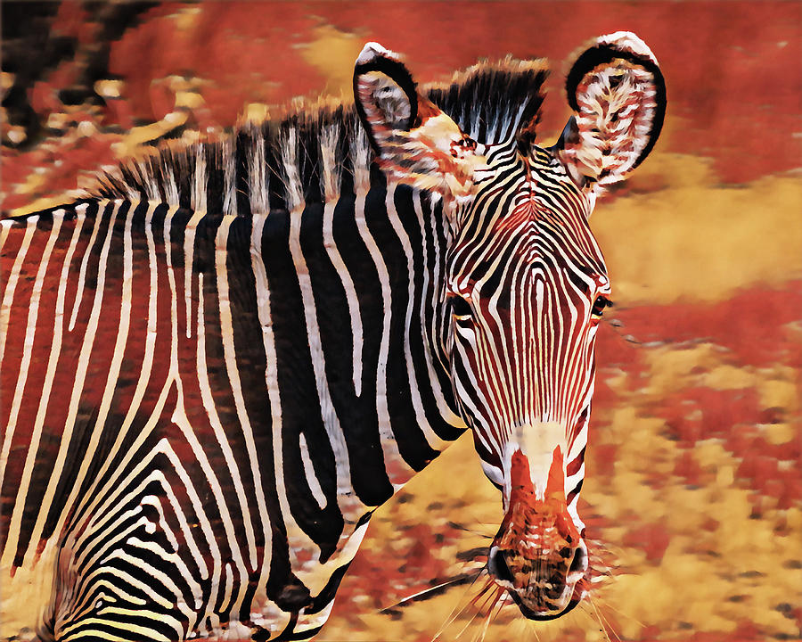Colors of Africa by Susan Maxwell Schmidt