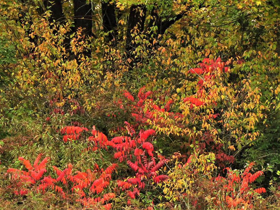 Colors of Autumn  by Lori Frisch