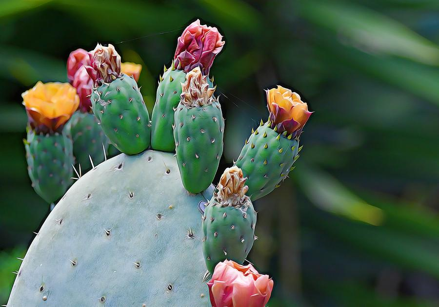 Colors Of Cacti by Fraida Gutovich