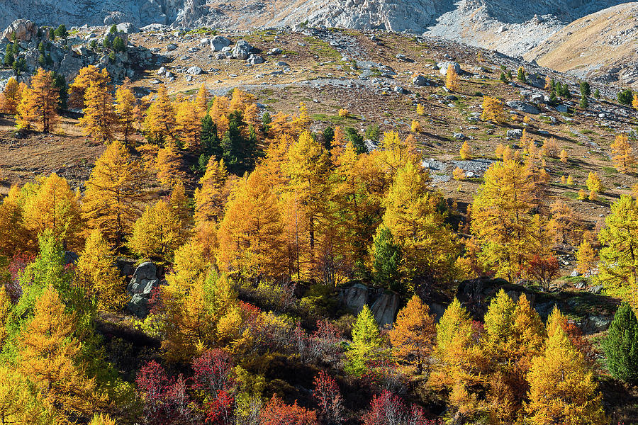 Colors of fall - 11 - French Alps by Paul MAURICE