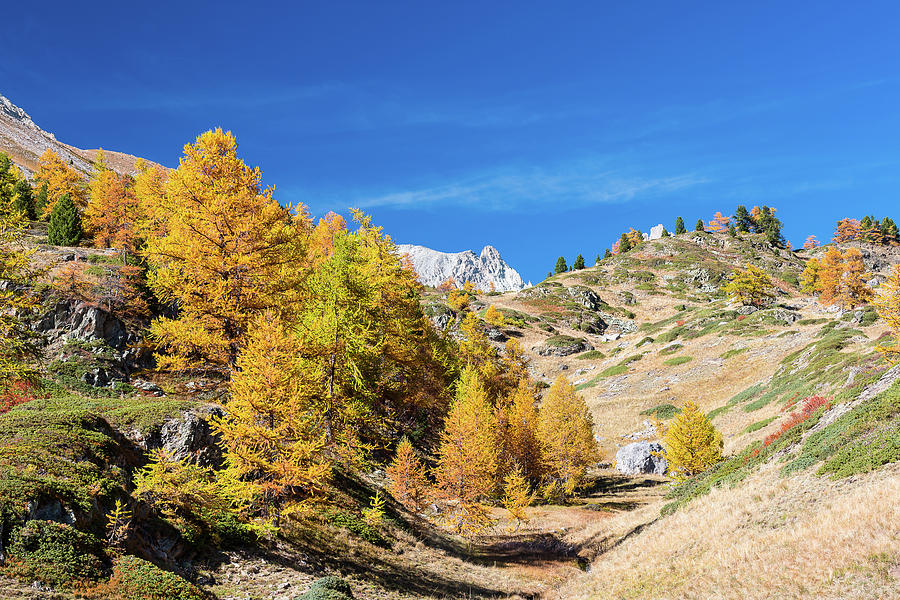 Colors of fall - 5 - French Alps by Paul MAURICE