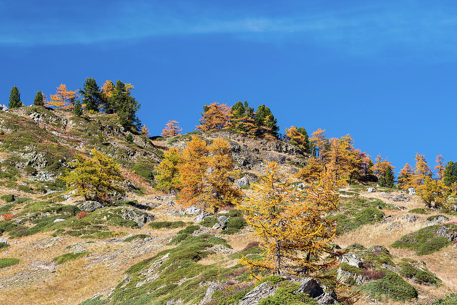 Colors of fall - 9 - French Alps by Paul MAURICE
