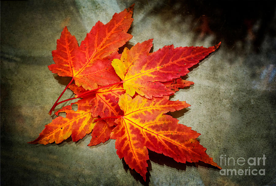 Colors of Fall by Debra Fedchin