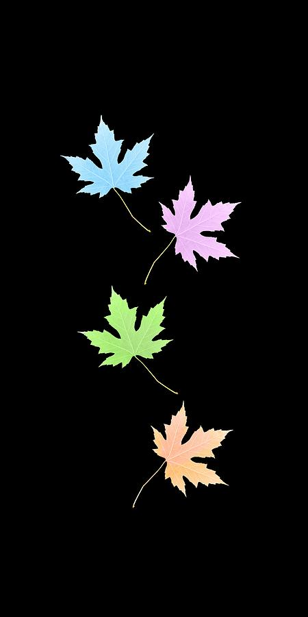Colors of The Seasons - Transparent background by Reynaldo Williams