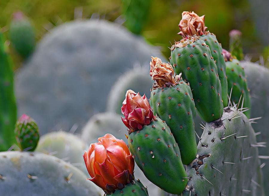 ColorsOf Cacti 2 by Fraida Gutovich