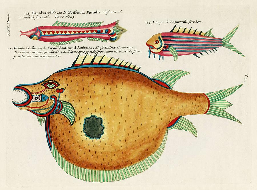 Colourful And Surreal Illustrations Of Fishes Found In Moluccas  Indonesia And The East Indies By L Painting