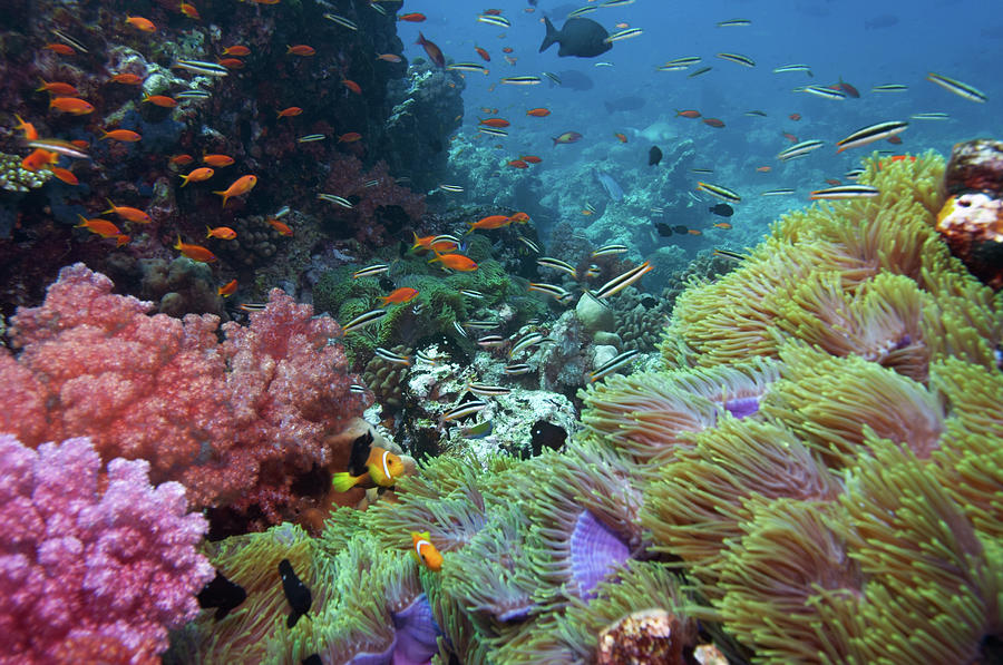 Colourful Coral Reef Photograph by Amriphoto